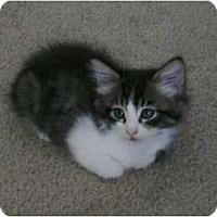 Adopt A Pet :: Matio - lake elsinore, CA