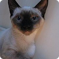 Adopt A Pet :: Vienna - Brea, CA