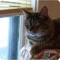 Adopt A Pet :: Sasquatch - Riverside, RI