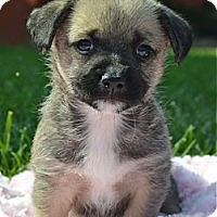 Adopt A Pet :: Waddles - Los Angeles, CA