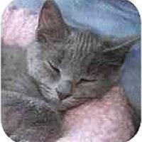 Adopt A Pet :: Mazie - Portland, OR