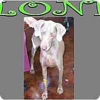 Adopt A Pet :: LONI - Las Vegas, NV