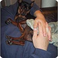 Adopt A Pet :: COCOA - Springvale, ME