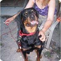 Adopt A Pet :: Rocko - Cuddebackville, NY