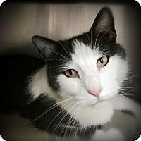 Adopt A Pet :: Malone - Pekin, IL