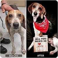 Hound (Unknown Type)/Beagle Mix Dog for adoption in Hicksville, New York - Ally