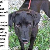 Adopt A Pet :: # 414-09 - ADOPTED! - Zanesville, OH