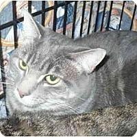 Adopt A Pet :: Peggy Sue - Colmar, PA