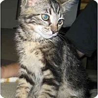 Adopt A Pet :: Heath - Davis, CA