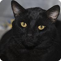 Adopt A Pet :: Gomez - Lombard, IL
