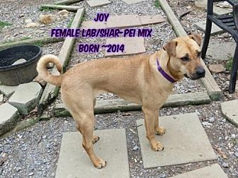 Labrador Retriever/Shar Pei Mix Dog for adoption in Huddleston, Virginia - Joy