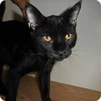 Adopt A Pet :: Valiant - Milwaukee, WI