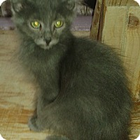 Adopt A Pet :: Marcus - Whittier, CA