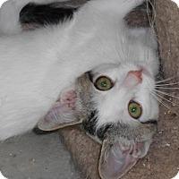 Adopt A Pet :: Renvanna - North Highlands, CA