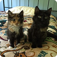 Adopt A Pet :: Rosie - Sterling Hgts, MI