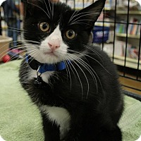 Adopt A Pet :: Chance - Sacramento, CA