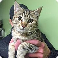 Adopt A Pet :: THE PEANUT - Pt. Richmond, CA