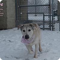 Adopt A Pet :: Hope - Bucyrus, OH
