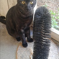 Adopt A Pet :: Hobo - Barnwell, SC