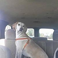 Adopt A Pet :: Phillip - Crestview, FL