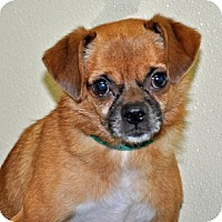 Adopt A Pet :: Eggo - Port Washington, NY