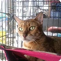 Adopt A Pet :: Truffles Noir - Lantana, FL