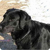 Adopt A Pet :: Colby - Rigaud, QC