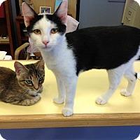 Adopt A Pet :: Twinkle - Lake Charles, LA