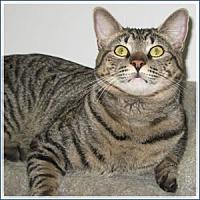 Adopt A Pet :: Rascal - Midway City, CA