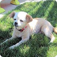 Adopt A Pet :: Lulu - Fresno, CA