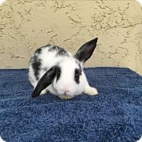 Adopt A Pet :: Bandit - Bonita, CA