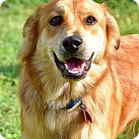 Adopt A Pet :: Jockamo - New Canaan, CT