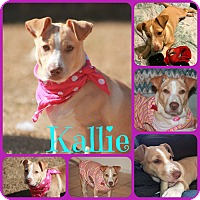 Terrier (Unknown Type, Small) Mix Dog for adoption in Ft Worth, Texas - Kallie