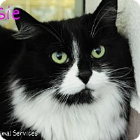 Domestic Longhair Cat for adoption in Hamilton, Ontario - Mousie