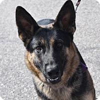 Adopt A Pet :: Raven - Greensboro, NC