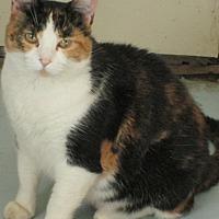 Adopt A Pet :: Marta - Buhl, ID