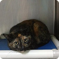Adopt A Pet :: Bridgette (Callie) - Port Clinton, OH