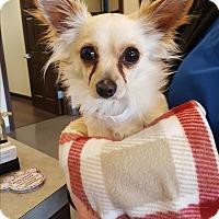 Adopt A Pet :: Brock - Indianapolis, IN