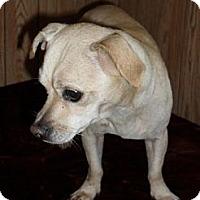Adopt A Pet :: Nacho - Chandlersville, OH