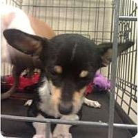 Adopt A Pet :: Waldo - little guy! - Phoenix, AZ