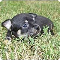 Adopt A Pet :: Frisco - Johnsburg, IL