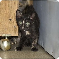 Adopt A Pet :: Striper - New Egypt, NJ