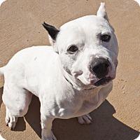 Adopt A Pet :: Phantom - Tanner, AL