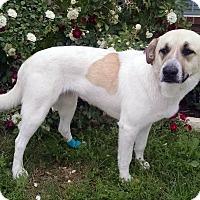 Adopt A Pet :: Charlee - Weatherford, TX