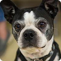 Adopt A Pet :: Dottie - Grass Valley, CA