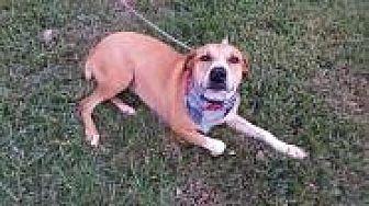 Shepherd (Unknown Type) Mix Dog for adoption in Seattle, Washington - Lexi Bain