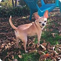 Adopt A Pet :: Maggie - Cedar Rapids, IA
