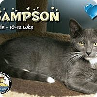 Adopt A Pet :: Sampson - Davenport, IA
