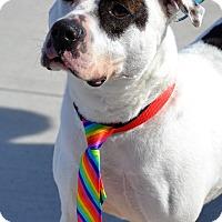 Adopt A Pet :: Samuel - Albemarle, NC