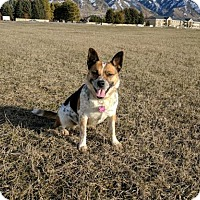 Adopt A Pet :: Eclipse - Logan, UT